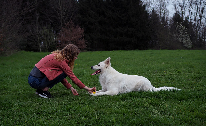 Dog Obedience-Training-at-Home