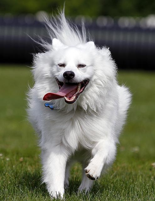 dog-come-command