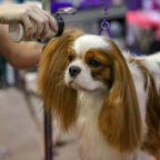 What Does a Dog Grooming Session Include